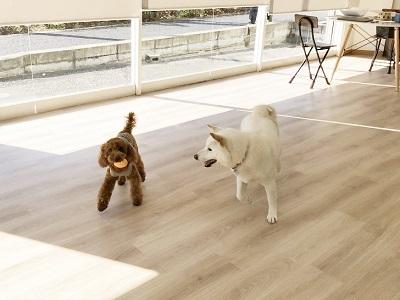 2020.2.21 犬の幼稚園 遊び