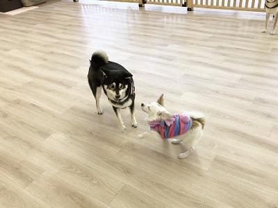 2020.2.5 犬の幼稚園 仲良し犬