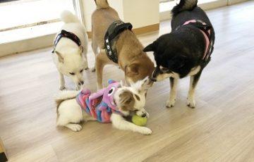 2020.2.5 犬の幼稚園 可愛い