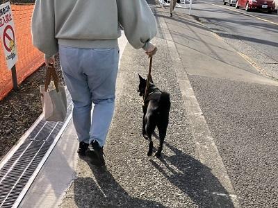 お散歩練習