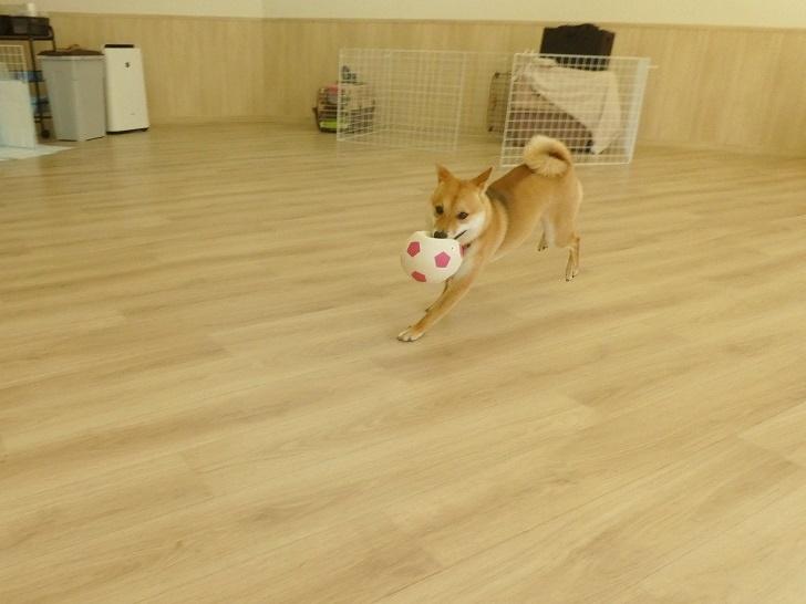 ボール遊び クッキー君