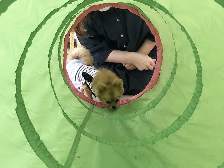 トンネルに挑戦