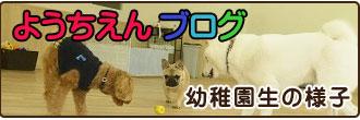 犬の幼稚園ブログ